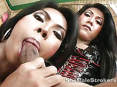 two amazing ladyboys in hot oral action